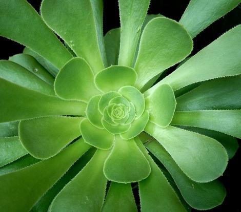 succulent-plant-1562895