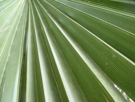 palm-1546472