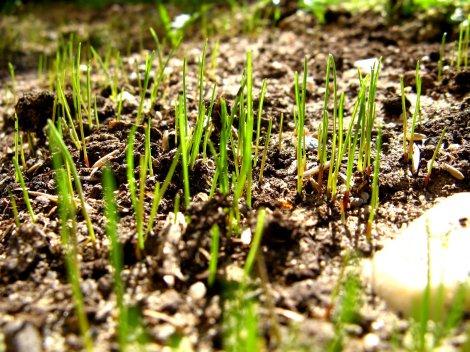 grass-1374264